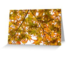 Under the Japanese Maple - Impressions Of Fall Greeting Card