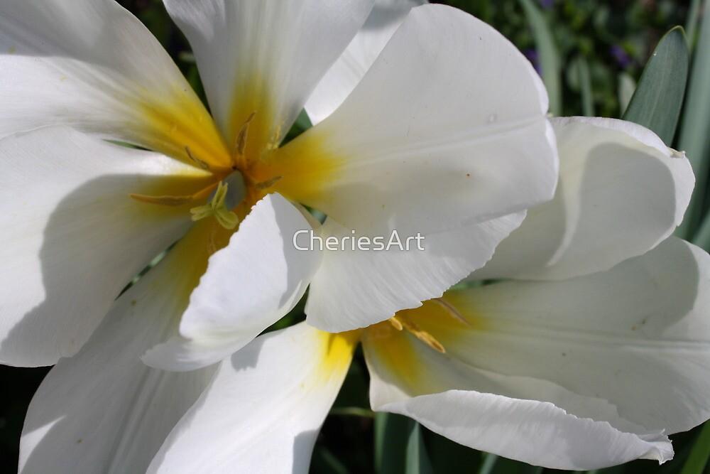 Springtime White by Cherie Balowski