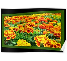 Gold Field of Flowers Poster