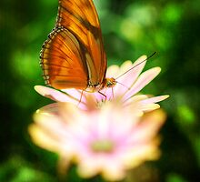 Butterfly on a Daisy  by Saija  Lehtonen