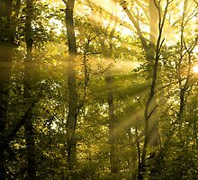 Sunrays Through the Trees by Natalie Kinnear