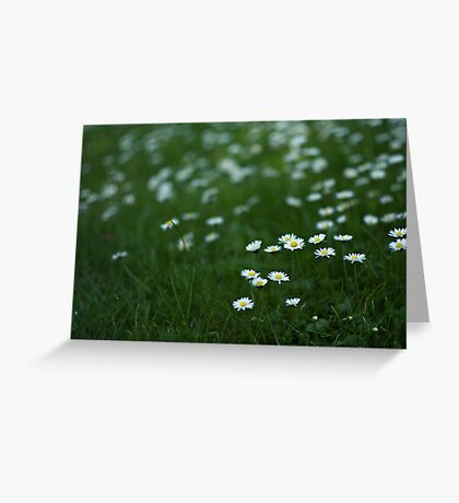 Little white daisies Greeting Card