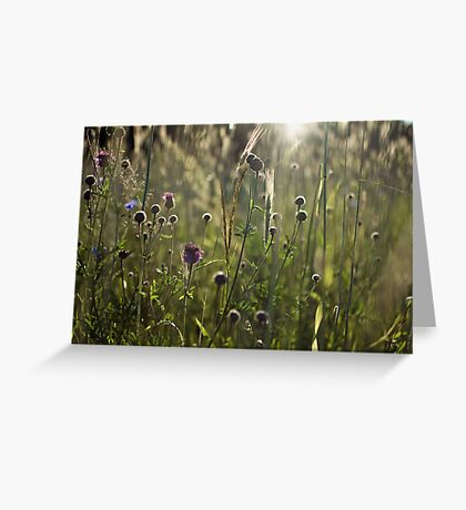 Flowers during sunset Greeting Card