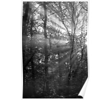 Sunrays Through the Trees in Black and White Poster