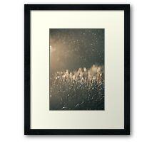 Rain and light Framed Print