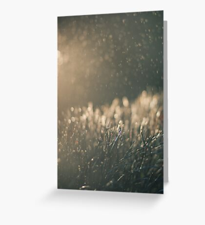Rain and light Greeting Card