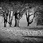 Grieve by Lou Wilson
