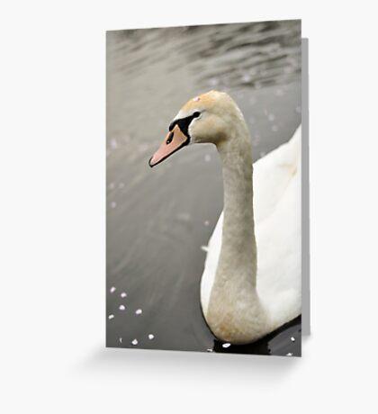 Swan Greeting Card
