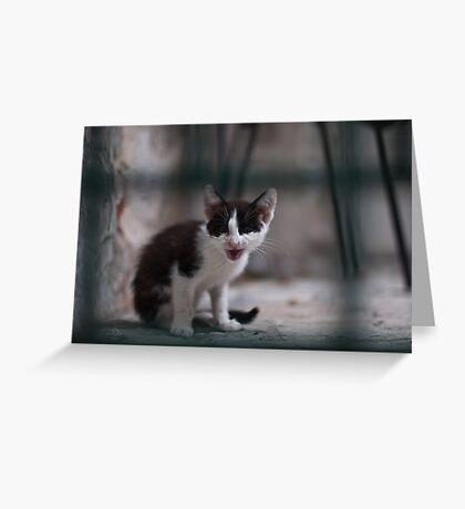 Meow! Greeting Card