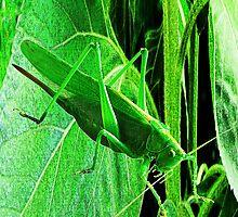 Grasshopper by NIKULETSH