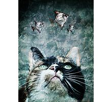 Abyss cat #2 Photographic Print