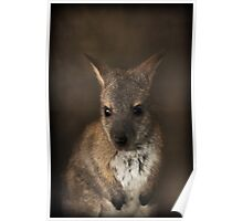 Baby Wallaby ~ Poster