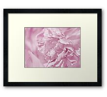 Peony In Pastel Pink Framed Print