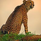 Who goes there? by Explorations Africa Dan MacKenzie
