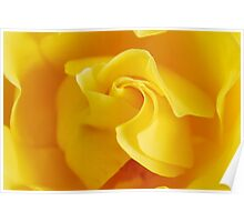 Yellow Precious Poster