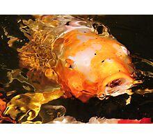 Colorful Koi Photographic Print