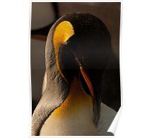Emperor Penguin Grooming Poster