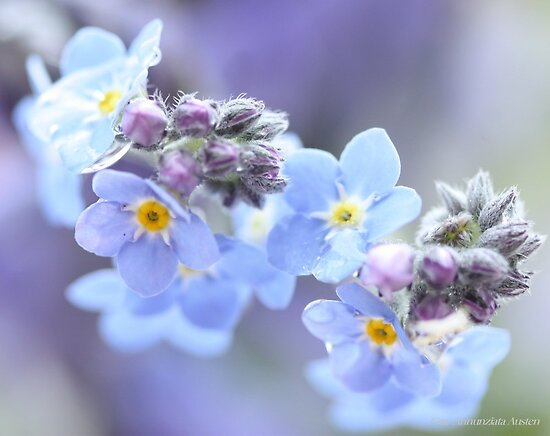 FORGET ME KNOTS FOR YOU by Gea Austen