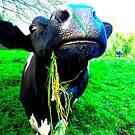Veggie by Johnathan Bellamy