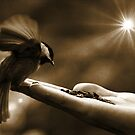 Hold fast to your dreams, for without them life is a broken winged bird that cannot fly by Kathryn  Young