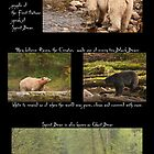 Legend of the Spirit Bear for Earth Day by Owed to Nature