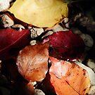 5 Leaves by Drew Walker
