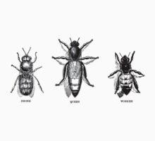 Honeybees by Jeff East