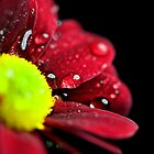 Drops on the flower by Nevreva