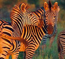 Swish of the tail by Explorations Africa Dan MacKenzie