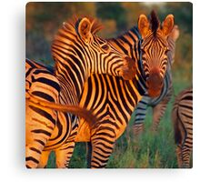 Swish of the tail Canvas Print