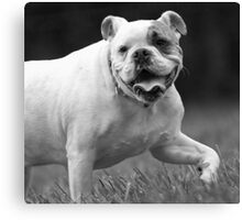 Bully For You! Canvas Print