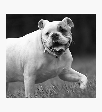 Bully For You! Photographic Print