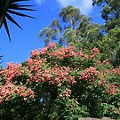 A Blooming Tree in the Rainforest by aussiebushstick