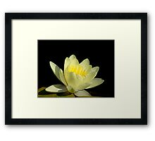 Pond Lily Lightness Framed Print