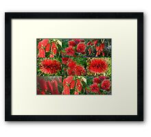 Red Bottlebrush Framed Print