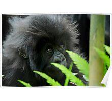 Gorilla Baby Poster
