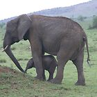 baby elephant and mother by LSPJS