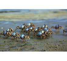 Soldier Crabs Photographic Print