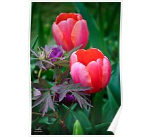 A Tulip And Other Leaves II Poster