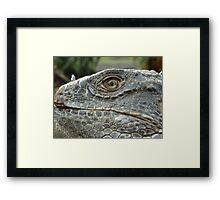 Bearded Lizard Framed Print