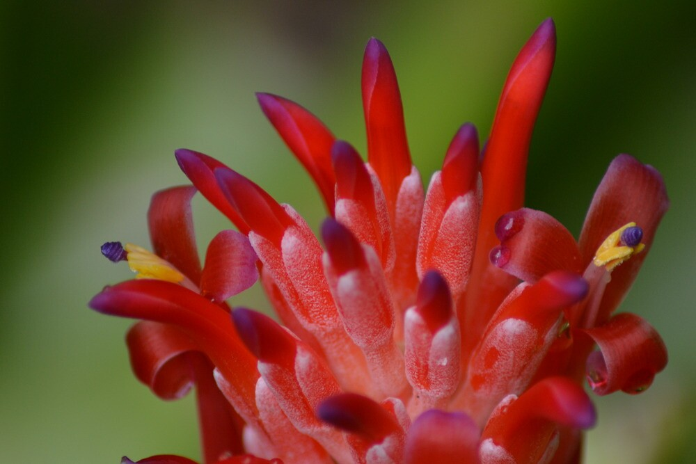 Bromeliad by TheaShutterbug