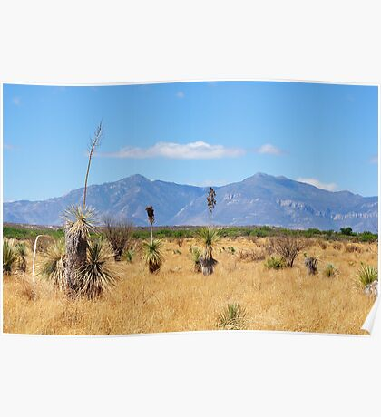 San Pedro Riparian Conservation area Poster