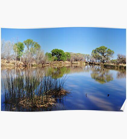 San Pedro Riparian Conservation Area- pond Poster