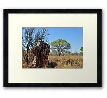 San Pedro Riparian Conservation Area 2 Framed Print