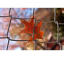 Autumn in Christchurch Photographic Print