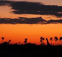 Last light by Explorations Africa Dan MacKenzie
