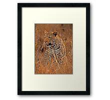 Evening Leopard, Kruger National Park Framed Print