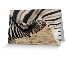 Chapman Zebra Baby Greeting Card