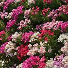 Floral Rug by Nira Dabush