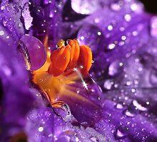 Purple rain by PhotoTamara